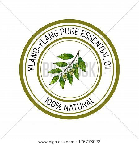 ylang-ylang, essential oil label, aromatic plant. Vector illustration