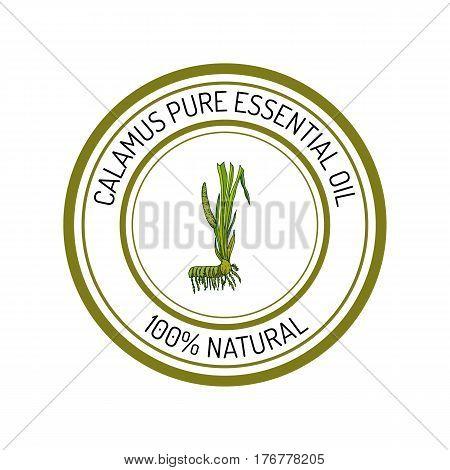 calamus, essential oil label, aromatic plant Vector illustration