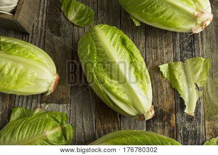 Raw Green Organic Romaine Lettuce