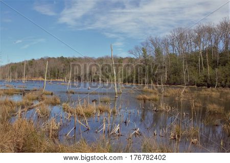 Wetlands with trees and tall clumps of grasses