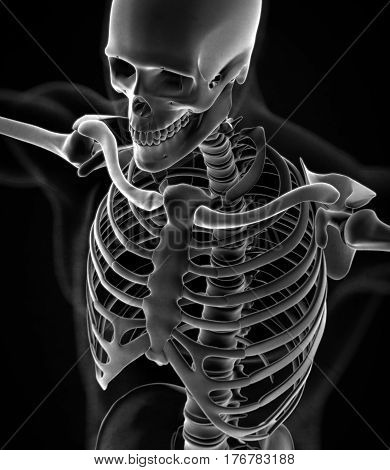 Collar bone xray. Human anatomy skeletal system, torso, ribs. 3D illustration