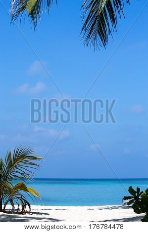 Tropical white sandy beach with palm trees. Maldives.