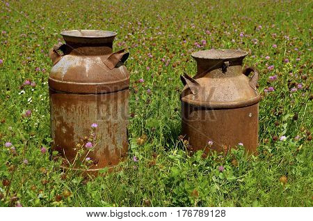 Two rusty milk and cream cans are left in a field of blooming clover