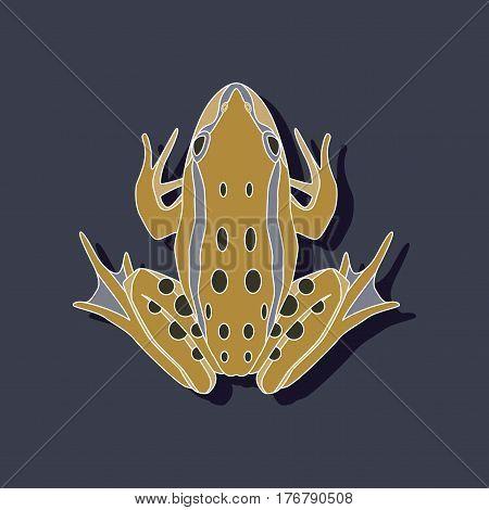 toad amphibian paper sticker on stylish background