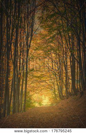 Carpathian Magic Golden Tonnel