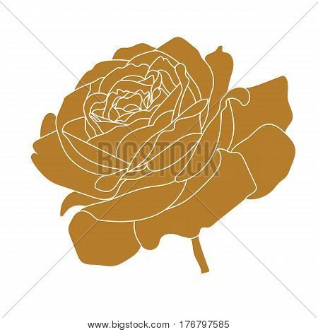 Graphical golden flower illustration. golden rose flower, contour rose flower, bloom rose flower, decorative rose flower, isolate rose flower, blossom rose flower, monochrome rose flower. Vector.