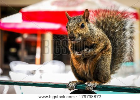 close up of a squirrel sitting on a bench