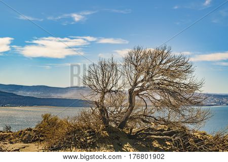 Arid Tree Punta Del Marquez Viewpoint Chubut Argentina