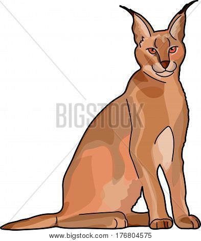 The brown caracal on a white background. Ears with tassels.