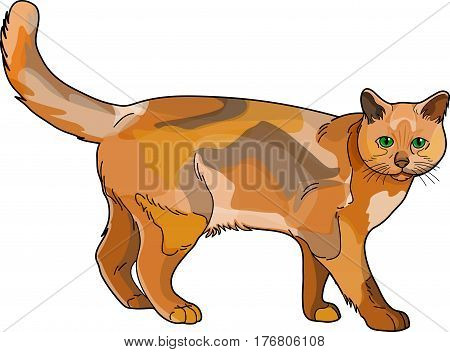 The brown spotted cat on a white background.