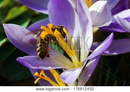 A Small Wasp On A Flower