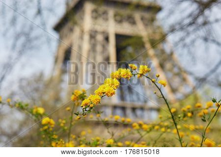 Yellow Flowers With Eiffel Tower In Paris
