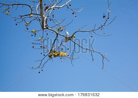 Tree branches with some leaves and blue sky