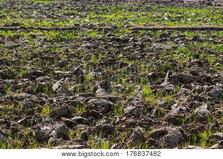 Shoved Soil Preparing for Agriculture , Ground