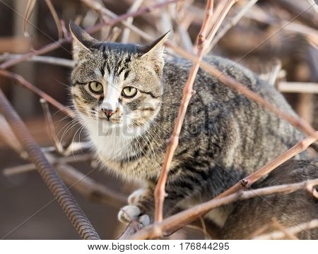 portrait of a cat in nature . Animal outdoors