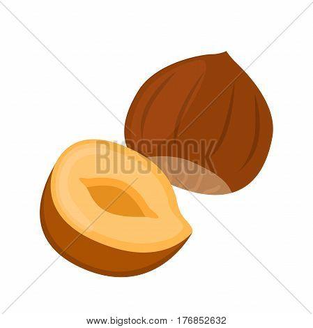 Hazelnut in flat cartoon style. Forest natural nut, organic ripe hazel.