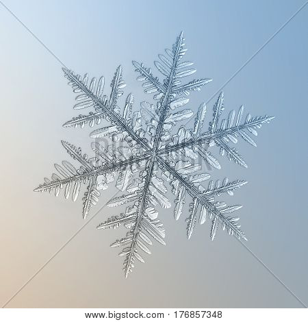 Macro photo of real snowflake: large snow crystal of fernlike dendrite type with good symmetry, long and elegant arms with side branches and lots of icy