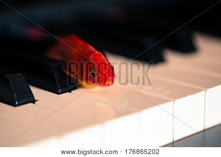 Goldfish lying on piano, art, abstract, background