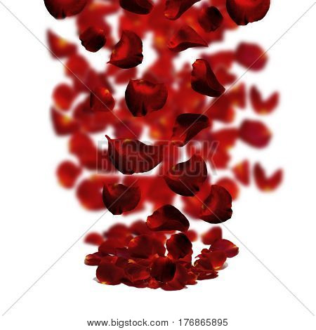 Rose petals fall to the floor. Isolated background.