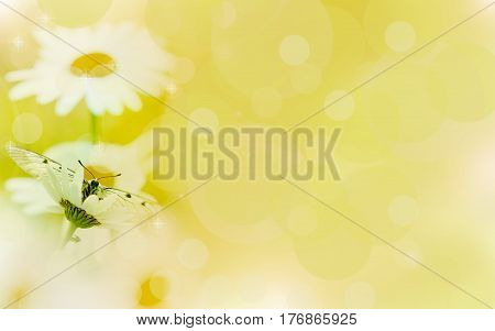 Floral backgroundchamomile in the rays of light and butterfly.