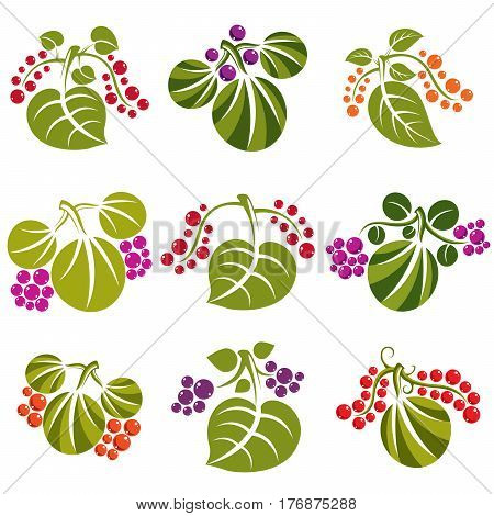 Set Of Vector Green Spring Leaves With Tendrils And Different Berries And Seeds. Ecology Theme Desig