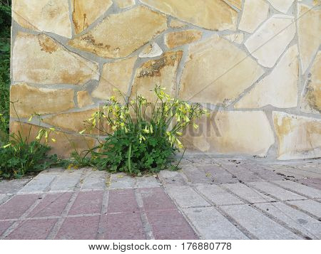 Yellow Flower Against Stone Clad Wall