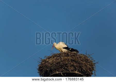 One White Stork (ciconia Ciconia) Nesting With Blue Sky