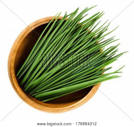 Chives scapes in wooden bowl. Fresh green edible herb of Allium schoenoprasum, used as an ingredient for fish, potatoes and soups. Isolated macro food photo close up from above on white background.