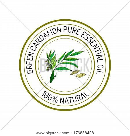 Green cardamon, essential oil label, aromatic plant. Vector illustration