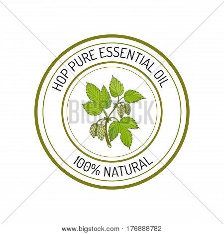 Hop, essential oil label, aromatic plant Vector illustration