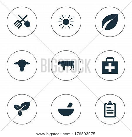 Vector Illustration Set Of Simple Agriculture Icons. Elements Plant, Leaves, Horticulture Equipment And Other Synonyms List, Medicament And Insolation.