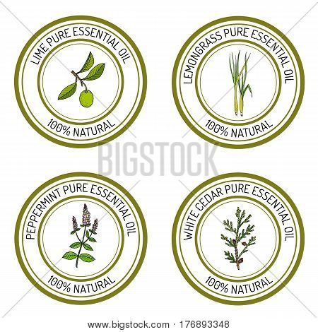 Set of essential oil labels lime, lemongrass, peppermint, white cedar Vector illustration