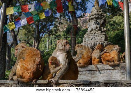 Monkey family in Swayambhunath Temple, Kathmandu, Nepal