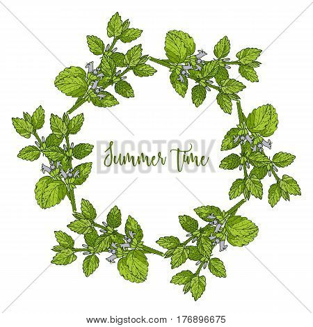 Hand drawing wild herbs wreath - melissa herb
