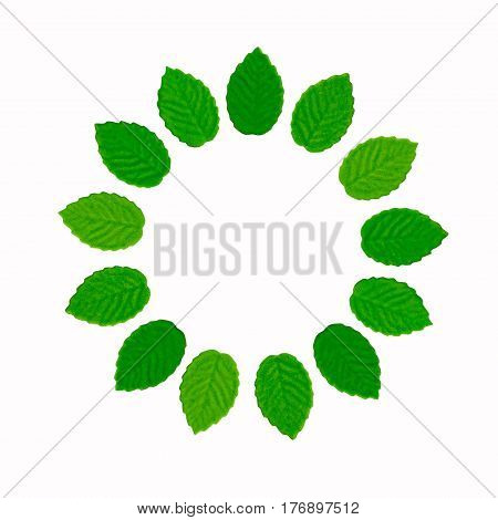 Round frame from decorative green leaves on a white background close-up. Mock-up template for design with place for an inscription. View from above. Flat lay.