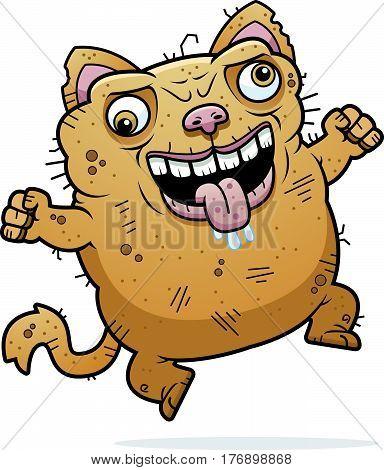 Crazy Ugly Cat