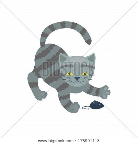 Cat breed cute kitten gray pet portrait fluffy young adorable cartoon animal and pretty fun play feline sitting mammal domestic kitty vector illustration. Beautiful posing playful paw design.