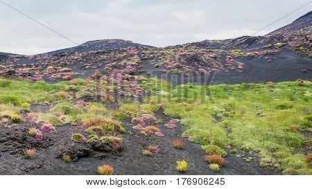 First Vegetation On Volcanic Land Of Mount Etna