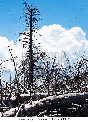 Burned Trees On Slope Of Etna Volcano