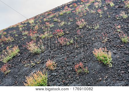 First Flowers On Volcanic Land Of Mount Etna