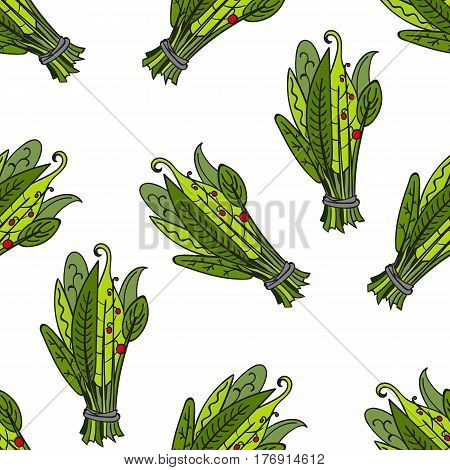Pattern with aromatic green herb vector illustration