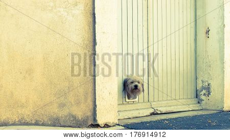 terrier dog pokes its head through small trapdoor in garage door.