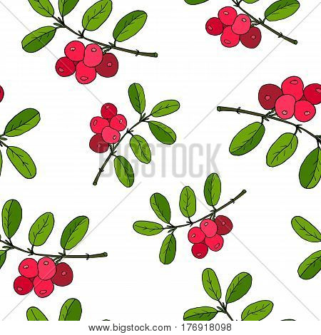 Cowberry seamless pattern with berry. Vector illustration