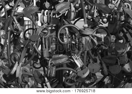 Beautiful black and white picture of wedding locks on the iron tree of love. Concept of love, loyalty, happiness. Wedding, Valentine's Day, celebration. Warm vintage tinting.