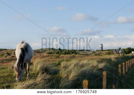 Overview of a Dune Landscape with a grazing Inlet Horse and a Water tower in the background