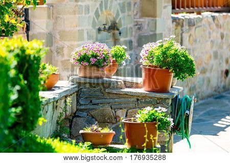 photo of cozy part of street full of flowers in pots and plants on the wonderful building background