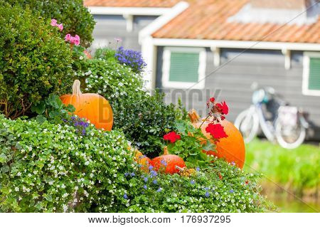 photo of beautiful garden full of bushes and pumpkins of different sizes