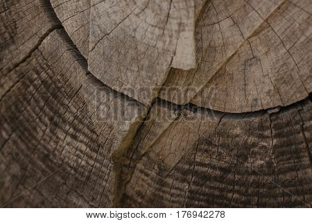 Tree bark background and texture. Wood texture of cut tree trunk. Abstract texture and background for designers. Closeup view of wood lines and circles.