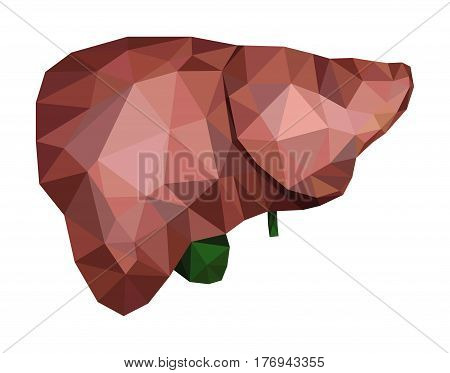 Realistic human liver with bile duct and gallbladder in low poly. Vector EPS 8.
