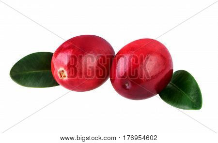 Cranberries on white closeup two ripe cranberry isolated